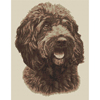 Cockapoo, Dark (Sepia) Cross Stitch Kit